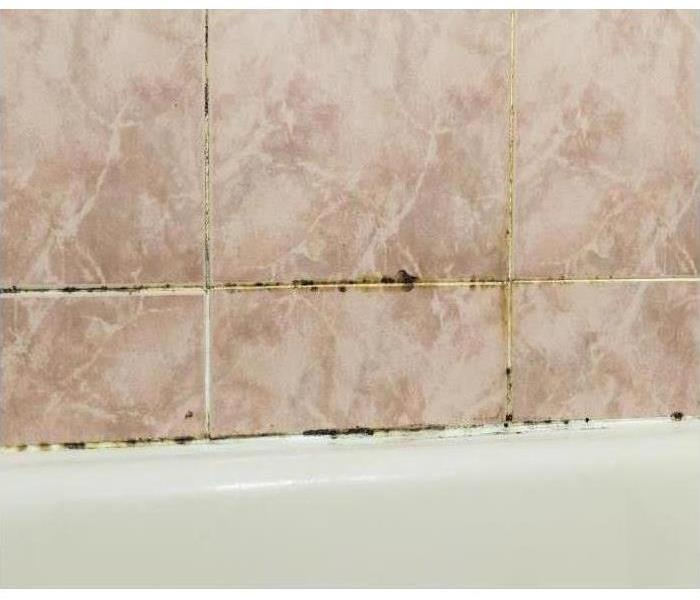 Mold on Bathroom Tile and Grout